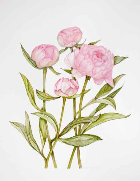 Botanich schilderen